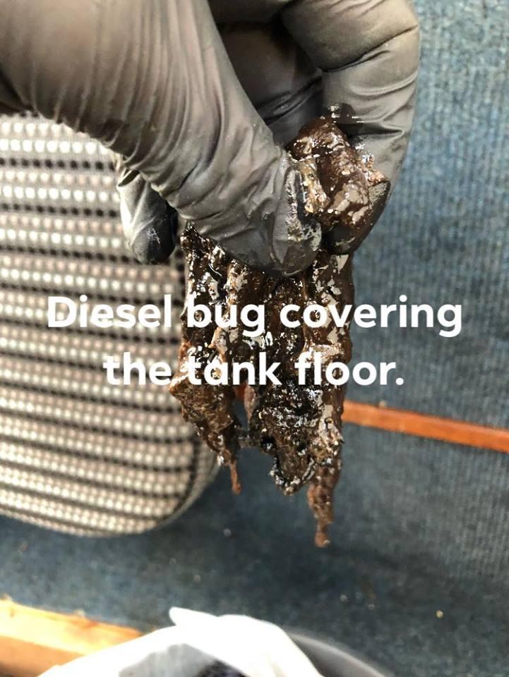 diesel bug in hand