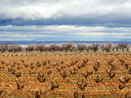 Los vino rosados de la DOCa Rioja