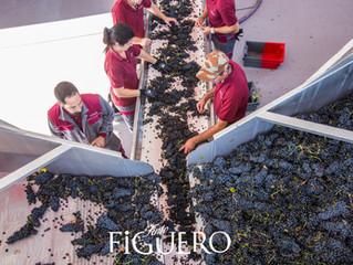 Figuero, un vino que despierta los sentidos