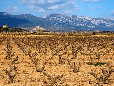 Rendidos ante los encantos de la DOCa Rioja