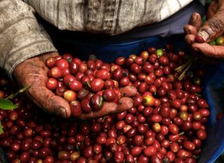 Nespresso Presenta Programa Piloto de Apoyo a Productores de Café