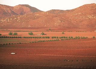 Monte Xanic se certifica en ISO 9001:2015