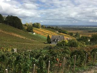 Pasión por el vino: Climats