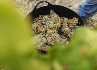 Rioja: Tiempo de Vendimia