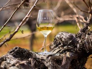 Los grandes vinos mexicanos de Domecq