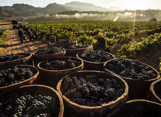 DOCa Rioja: Saber Quien Eres