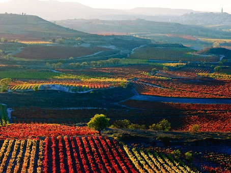 Fiel Compañero: Rioja D.O.C.