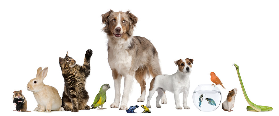 Group of pets together in front of white