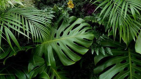 Augalų nuoma Lietuvoje, Palmės Lietuvoje