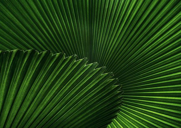 Palmės Lietuvoje, egzotiniai augalai internetu