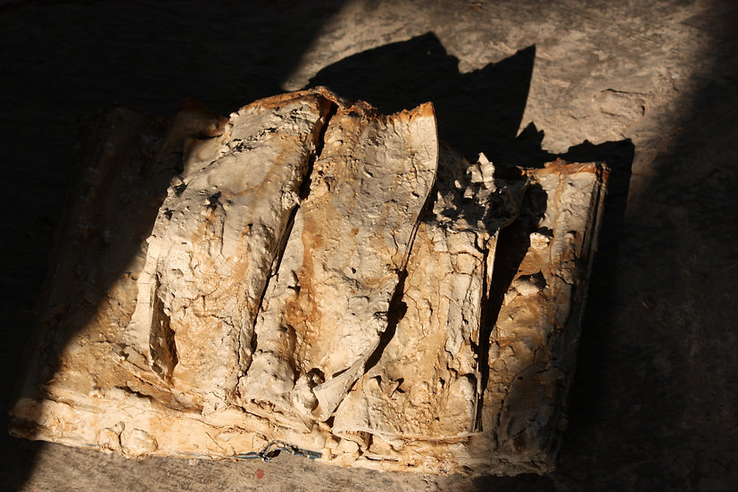 Book Fossil 1