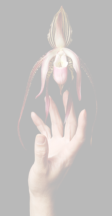 hand flower_edited_edited.png