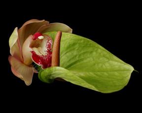 Pink Red Cymbidium Orchid Anthurium Copu