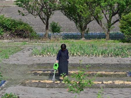 『畑』20210615
