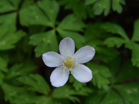 『白い花』20210418