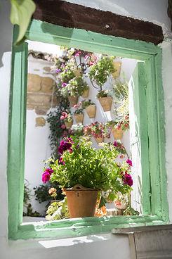 flowerpot-1512086_1920.jpg