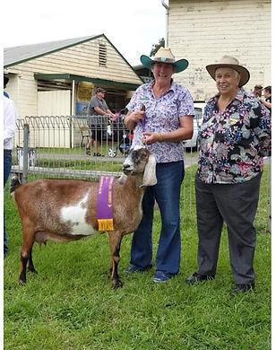 Goats2019