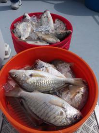 Solomons Bottom Fishing