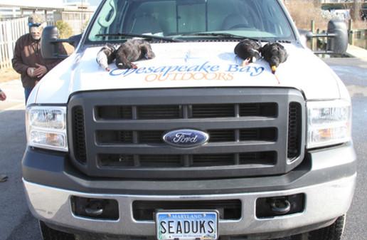 Chesapeake Bay Sea ducks
