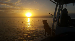 Chesapeake Bay Sea Duck Hunting