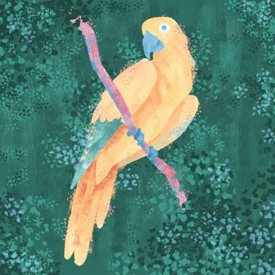 Pastel Parrot