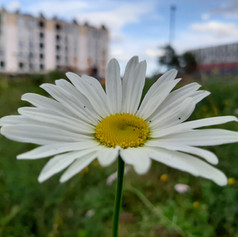 Wildflowers in Ancoats