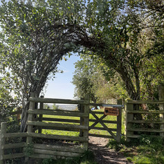 Glastonbury Orchard