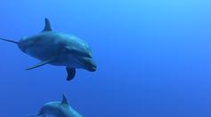 Plongée avec des dauphins