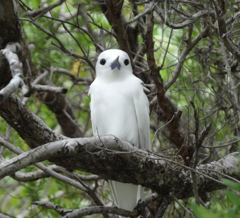 Île aux oiseaux au lagon bleu
