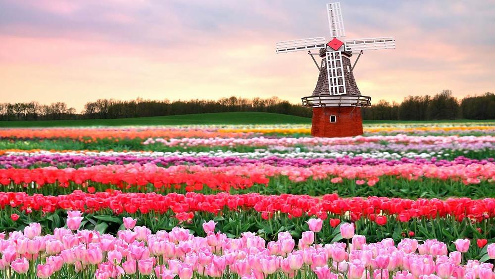 Jardines más bonitos del mundo: Jardines de Keukenhof (Holanda)