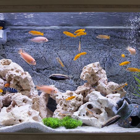 Tipos de piedras aptas para acuarios