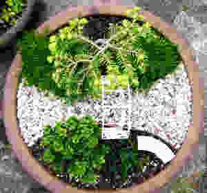 Mini jardines de cuento: jardín romántico en miniatura