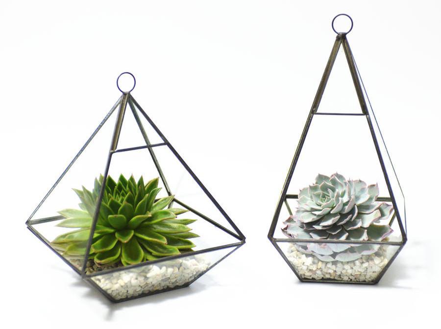Terrarios sencillos de una sola sola planta