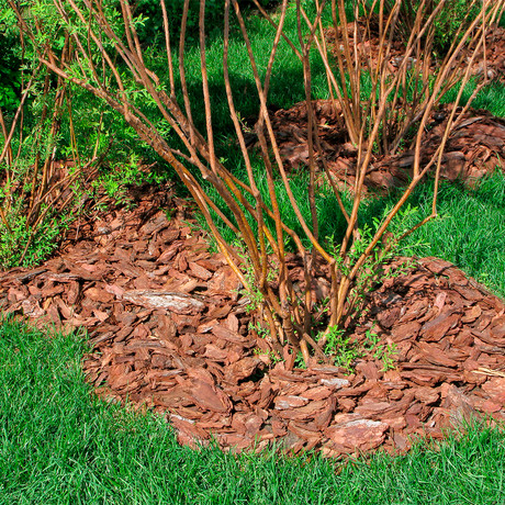 Beneficios de utilizar corteza de pino en el jardín