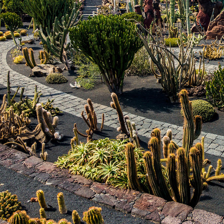 ¿Es posible recrear un jardín desértico en casa?