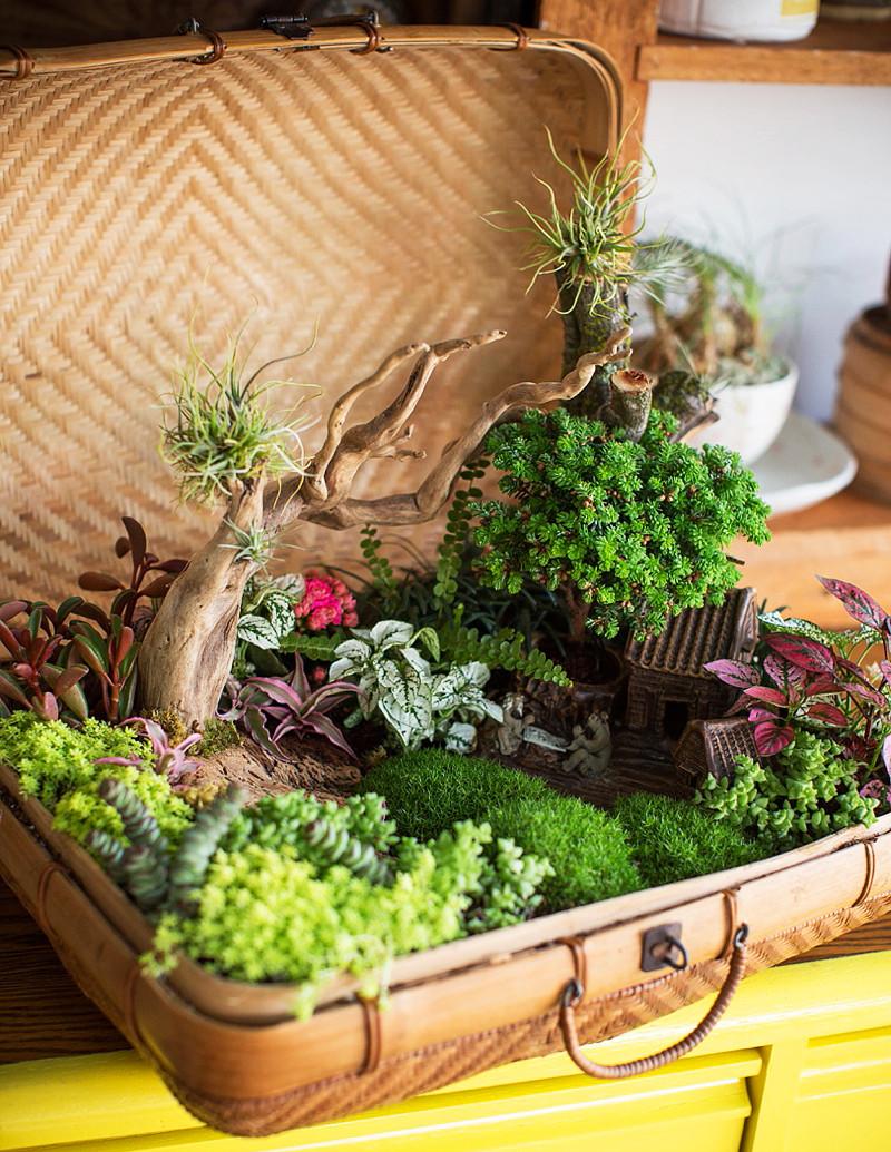 Mini jardines de cuento: mini jardín en una maleta