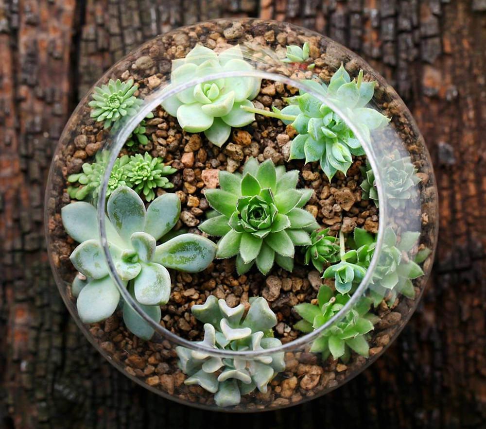 Decoración de terrarios con plantas y otros elementos decorativos