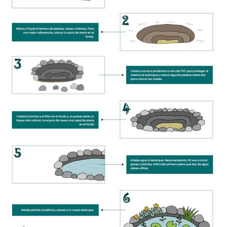 Infografía: cómo hacer un estanque en el jardín