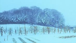 <いちご日記:雪対策>
