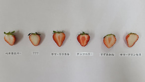 <いちご日記:NAT'sのイチゴたち Part.2>