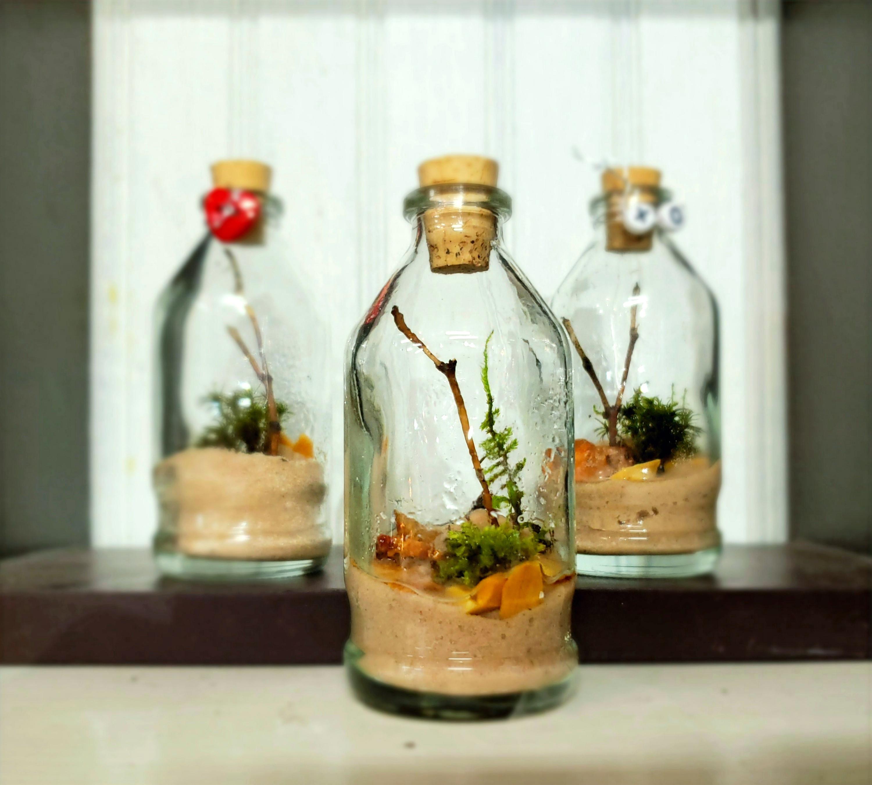 Sand & Moss Terrariums