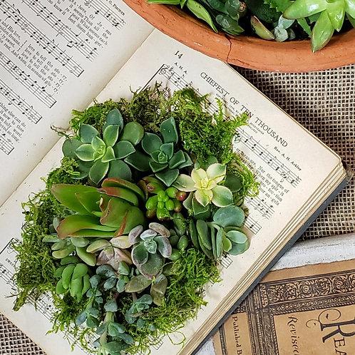 DIY Succulent terrarium kit for succulents in books or cups