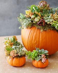 pumpkins with succulents.jpg