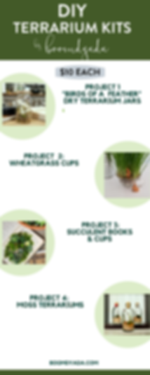 DIY Terrarium Kits