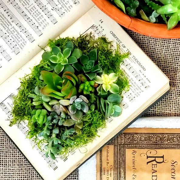 succulents in books!