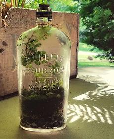 terrarium in Bourbon bottle