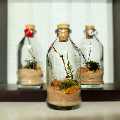 Moss terrarium kit