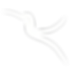 SINALhummingbird.png