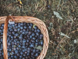 Wholesome Drinks : Blueberries, Watermelon, & Aloe