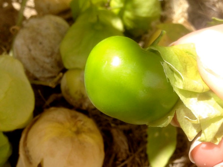 Cooking With a Pinch of History: Chile Verde